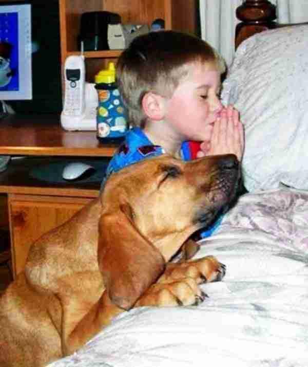 Δεκαπέντε σκυλιά που θα έκαναν τα πάντα για τα παιδιά!