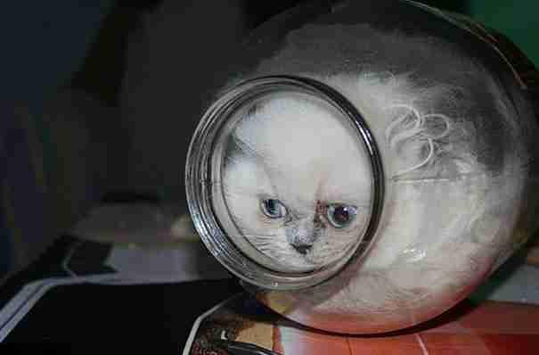 15 φωτογραφίες που αποδεικνύουν ότι οι γάτες χωράνε παντού!