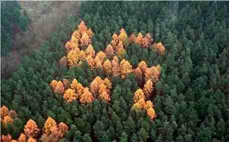 Το μυστηριώδες δάσος με τις σβάστικες