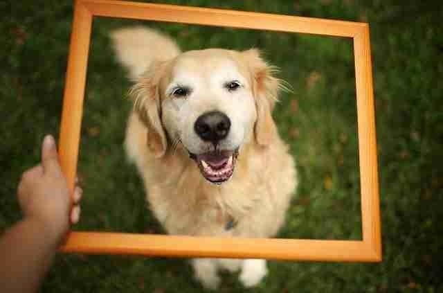 Τσάμπ: Ο πιο χαρούμενος σκύλος!