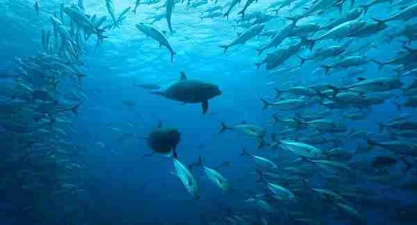 «Το Ρέκβιεμ του Ωκεανού»: Εντυπωσιακό βίντεο