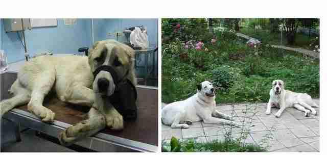 Φωτογραφίες σκύλων πρίν και μετά την υιοθεσία - dinfo.gr