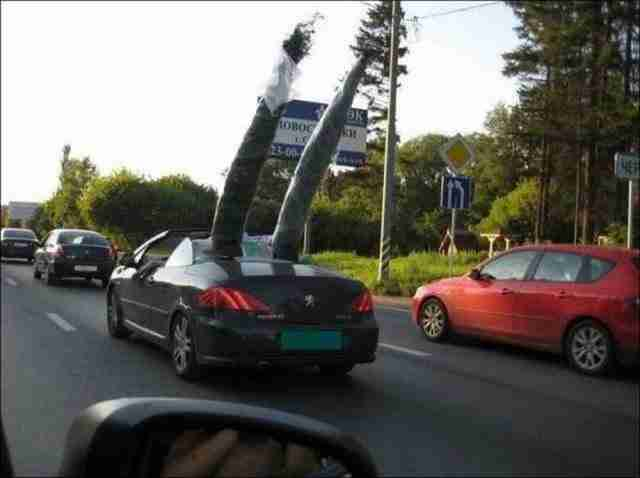 dinfo.gr - Παράξενα πράγματα που μπορείς να συναντήσεις στο δρόμο