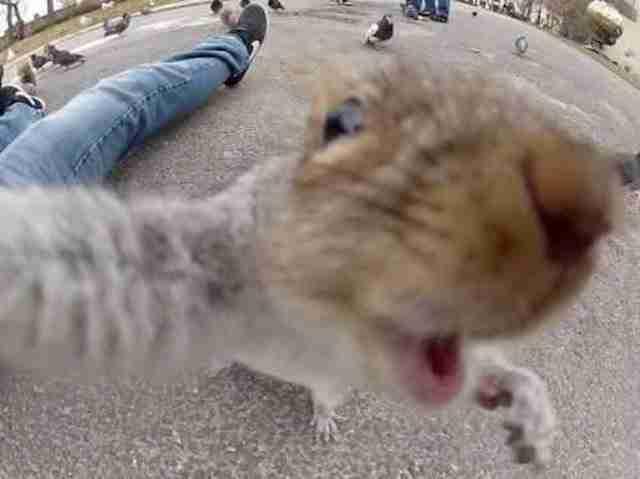 32 αστείες selfie φωτογραφίες!