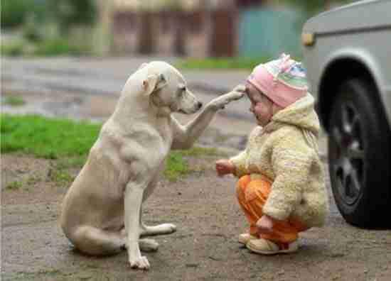 Σκύλοι και μωρά μαζί σε ένα απολαυστικό βίντεο