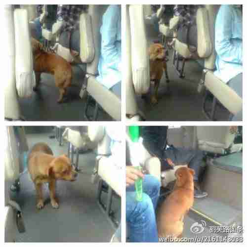 Ο σκύλος που ψάχνει στα λεωφορεία για το αφεντικό του
