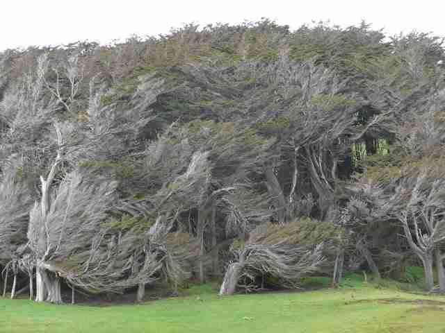 Τα παράξενα δέντρα του Slope Point
