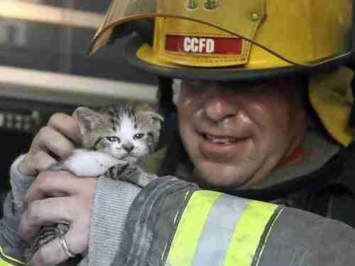 Πυροσβέστης σώζει γατάκι