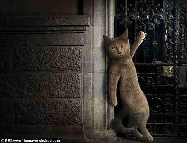 Οι πιο γκλαμουράτες γάτες που έχετε δει!