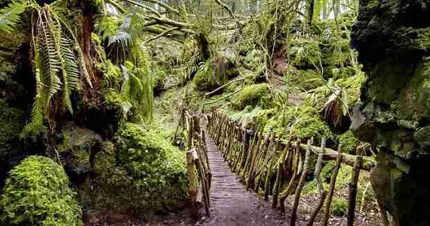 Τα πιο παράξενα δάση στον κόσμο