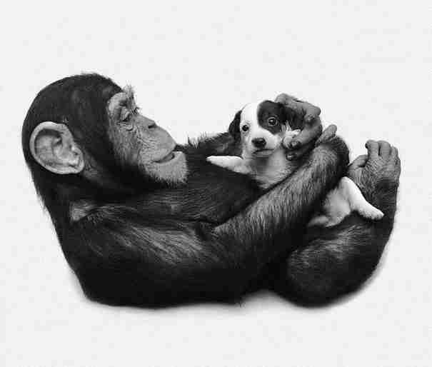Οι πιο 21 αταίριαστες φιλίες μεταξύ ζώων