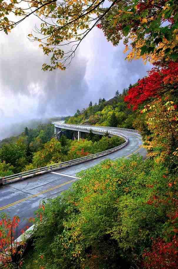 dinfo.gr - Έξι δρόμοι πάνω από τα δέντρα
