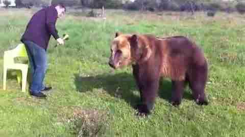 Ίσως η πιο έξυπνη αρκούδα στον κόσμο