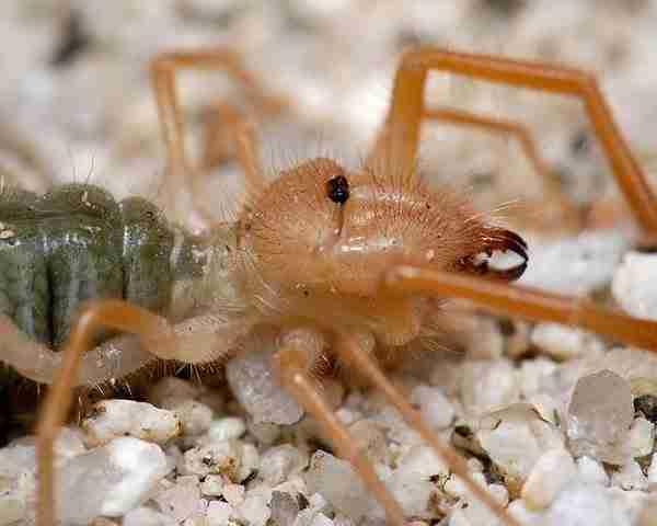 dinfo.gr - Τα 10 πιο τρομακτικά αλλά και πιο ακίνδυνα ζώα του κόσμου