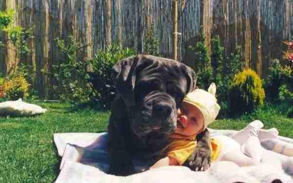 dinfo.gr - 15 φωτογραφίες που αποδεικνύουν ότι τα σκυλιά είναι πολύ καλοί φίλοι