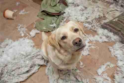 Ένοχα σκυλιά!