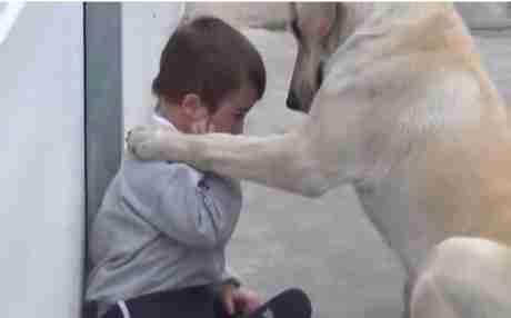 Η σκυλίτσα που προσέχει αγόρι με σύνδρομο Down