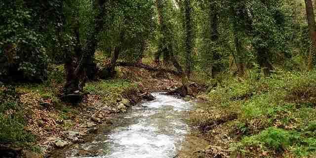 dinfo.gr - Ταξιδεύοντας στα ομορφότερα ελληνικά δάση
