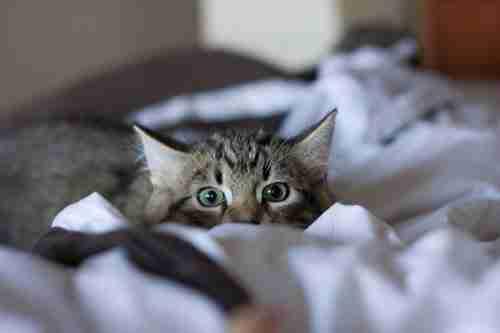 dinfo.gr - Γάτες που παραμονεύουν την κάμερα