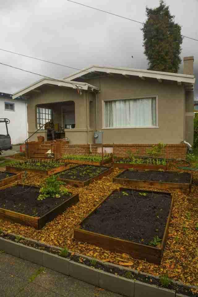 Αμερικανός πέταξε το γρασίδι, φύτεψε λαχανικά και τα μοιράζει στους γείτονες