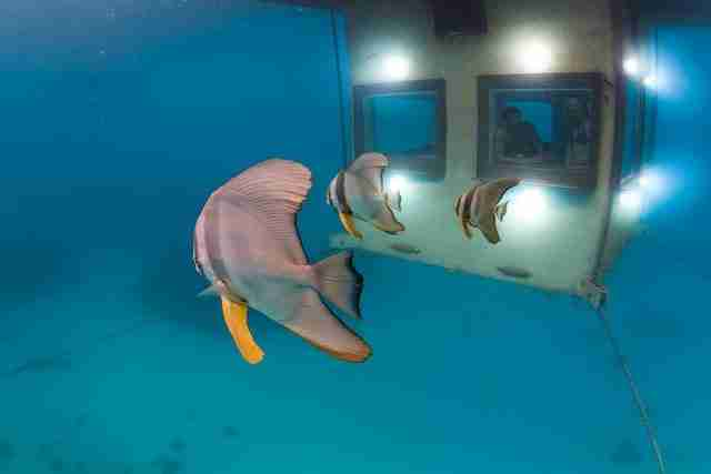 dinfo.gr - Ένα μοναδικό υποβρύχιο ξενοδοχείο στην Αφρική
