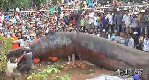dinfo.gr - Το τρομακτικό «Θαλάσσιο τέρας» που ξεβράστηκε στο Βιετνάμ