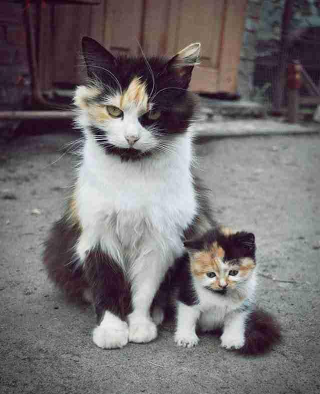 diaforetiko.gr : animals with miniature versions of themselves 1 33 μικρά ζώα φωτογραφίζονται παρέα με τις μαμάδες τους