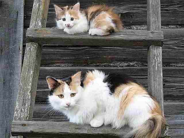 diaforetiko.gr : animals with miniature versions of themselves 10 33 μικρά ζώα φωτογραφίζονται παρέα με τις μαμάδες τους