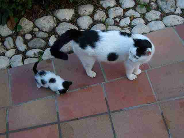 diaforetiko.gr : animals with miniature versions of themselves 13 33 μικρά ζώα φωτογραφίζονται παρέα με τις μαμάδες τους