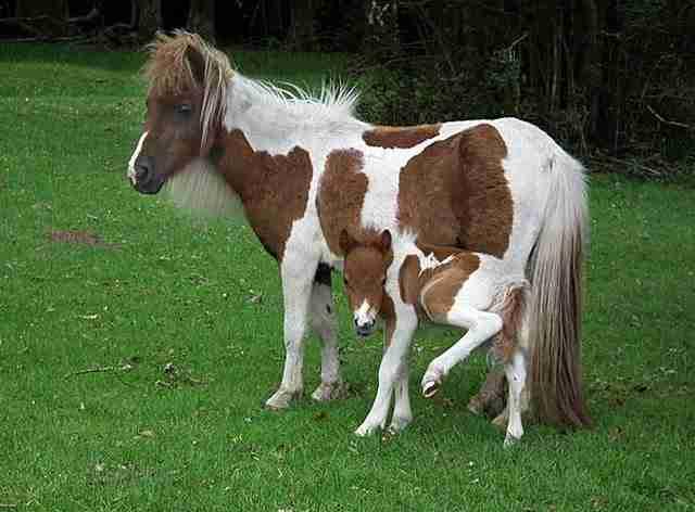 diaforetiko.gr : animals with miniature versions of themselves 22 33 μικρά ζώα φωτογραφίζονται παρέα με τις μαμάδες τους