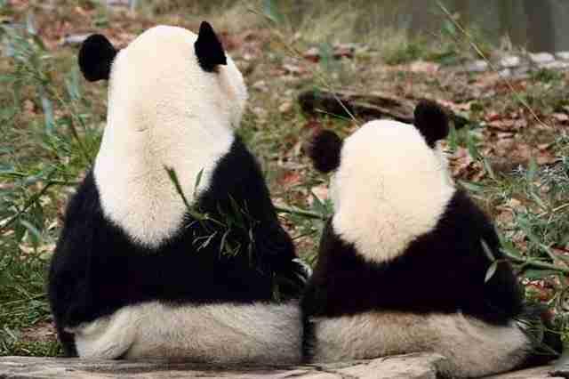 diaforetiko.gr : animals with miniature versions of themselves 24 33 μικρά ζώα φωτογραφίζονται παρέα με τις μαμάδες τους
