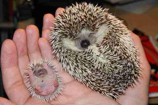 diaforetiko.gr : animals with miniature versions of themselves 3 33 μικρά ζώα φωτογραφίζονται παρέα με τις μαμάδες τους