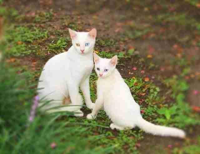 diaforetiko.gr : animals with miniature versions of themselves 30 33 μικρά ζώα φωτογραφίζονται παρέα με τις μαμάδες τους