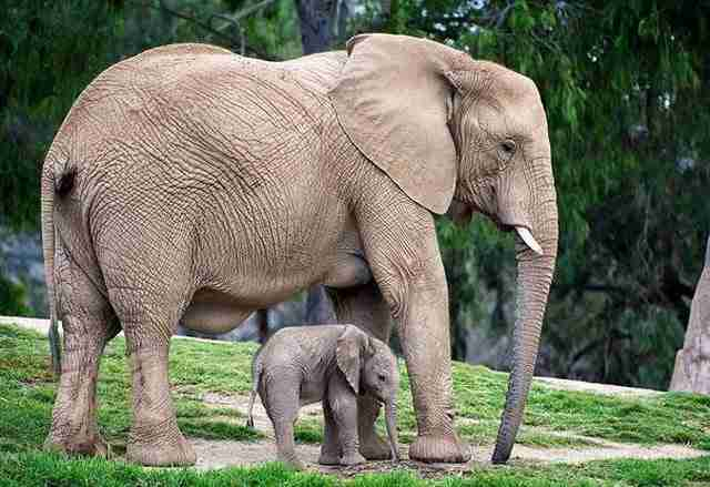 diaforetiko.gr : animals with miniature versions of themselves 36 33 μικρά ζώα φωτογραφίζονται παρέα με τις μαμάδες τους