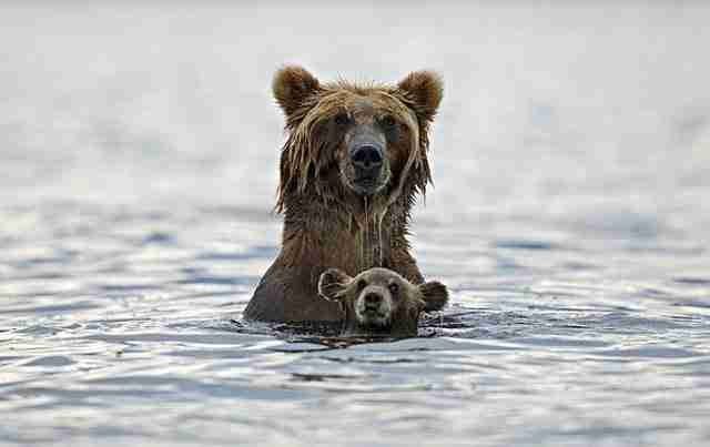 diaforetiko.gr : animals with miniature versions of themselves 8 33 μικρά ζώα φωτογραφίζονται παρέα με τις μαμάδες τους