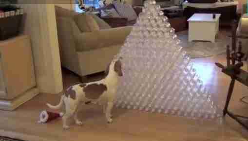 dinfo.gr - Το ωραιότερο Χριστουγεννιάτικο δώρο για..σκύλους!