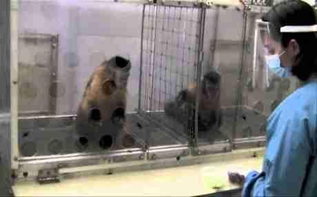 dinfo.gr - Τι συμβαίνει όταν δυο μαϊμούδες πληρώνονται άνισα για την ίδια δουλειά;