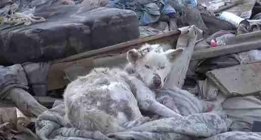 dinfo.gr - Η συγκινητική διάσωση ενός άστεγου σκύλου και η απίστευτη μεταμόρφωση του