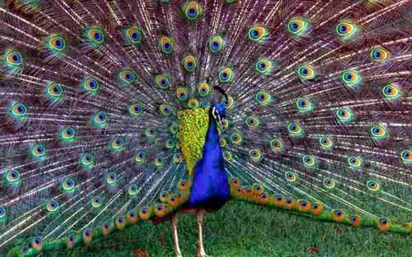 diaforetiko.gr : 154 Όσοι πιστεύετε ότι τα πάντα στη φύση είναι τυχαία, διαβάστε αυτό το άρθρο...