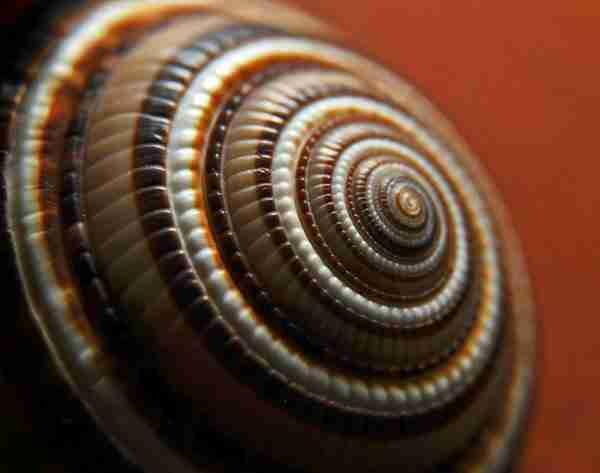 diaforetiko.gr : 163 Όσοι πιστεύετε ότι τα πάντα στη φύση είναι τυχαία, διαβάστε αυτό το άρθρο...