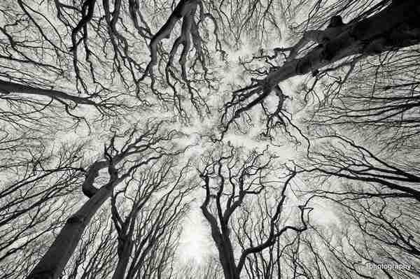 diaforetiko.gr : 217 Όσοι πιστεύετε ότι τα πάντα στη φύση είναι τυχαία, διαβάστε αυτό το άρθρο...