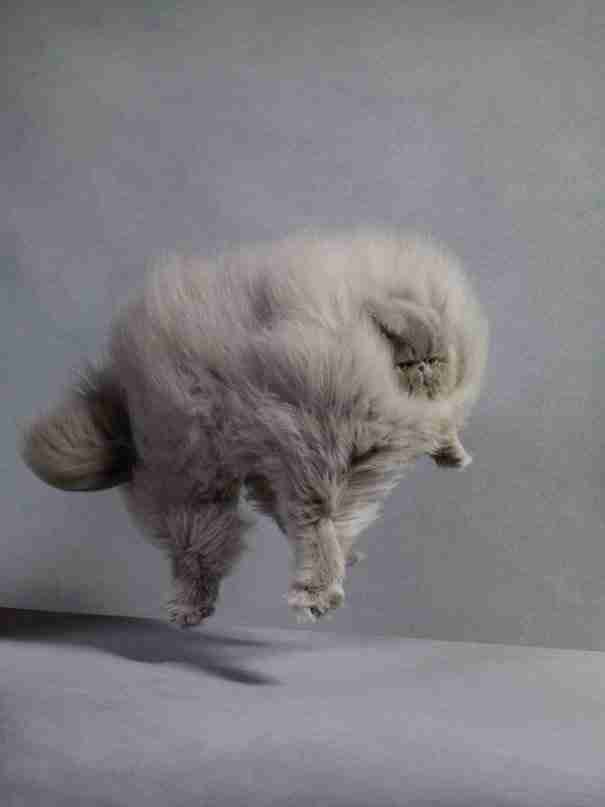 dinfo.gr - 31 ζώα που είναι κυριολεκτικά.. γούνινες μπάλες! ΠΡΟΣΟΧΗ: Υπερβολικά  χαριτωμένο!