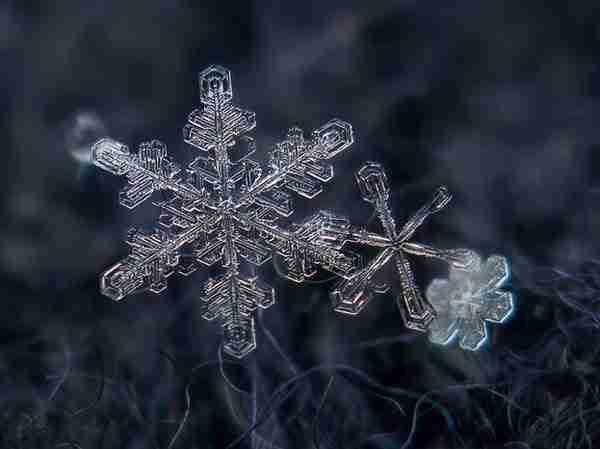 diaforetiko.gr : 310 Όσοι πιστεύετε ότι τα πάντα στη φύση είναι τυχαία, διαβάστε αυτό το άρθρο...