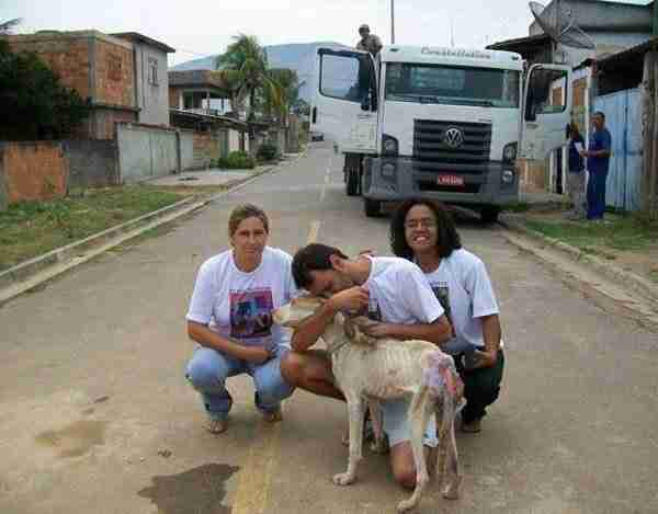 dinfo.gr - Η απίστευτη μεταμόρφωση ενός αδέσποτου σκύλου!