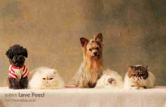 dinfo.gr - Με ποιο τρόπο σκύλοι και γάτες μαθαίνουν στα μικρά τους να κατεβαίνουν σκάλες