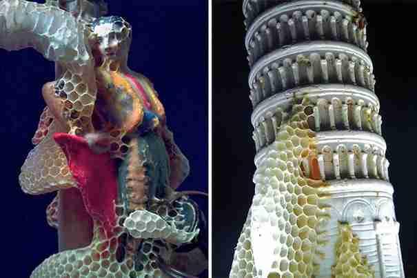 dinfo.gr - Όταν οι μέλισσες δημιουργούν μικρά έργα τέχνης