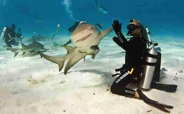 dinfo.gr - Οι 40 καλύτερες φωτογραφίες που λήφθηκαν την πιο κατάλληλη στιγμή