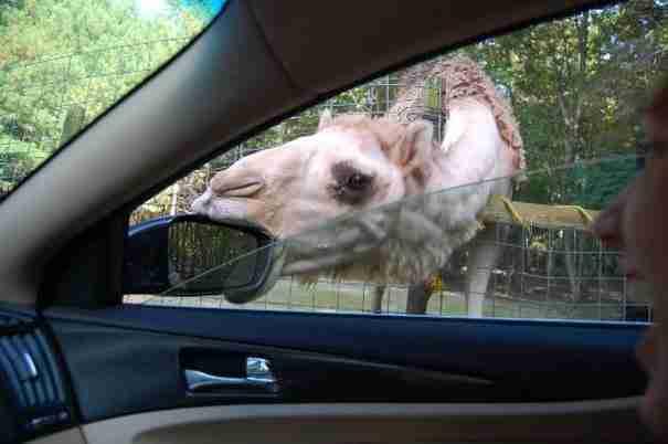 dinfo.gr - Υπάρχει ένας ζωολογικός κήπος που διαφέρει από τους υπόλοιπους! Δείτε γιατί..