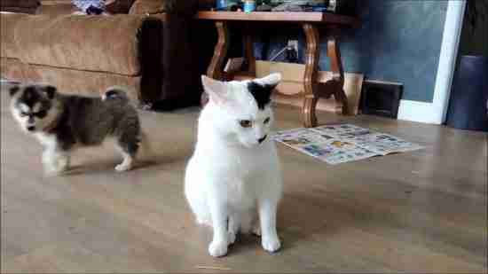 Τι συνέβη όταν δυο μικρά κουτάβια συνάντησαν μια γάτα; Δείτε το βίντεο!