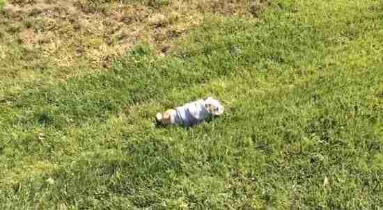 dinfo.gr - Το κουτάβι που λατρεύει να κατεβαίνει πλαγιές κάνοντας τούμπες!
